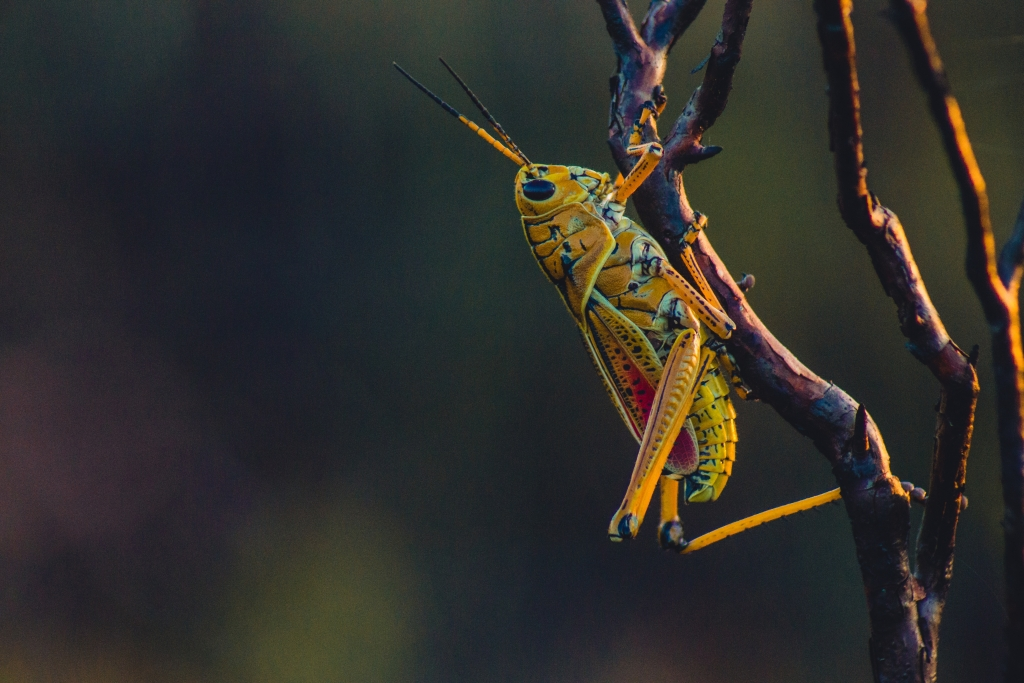 insects 11