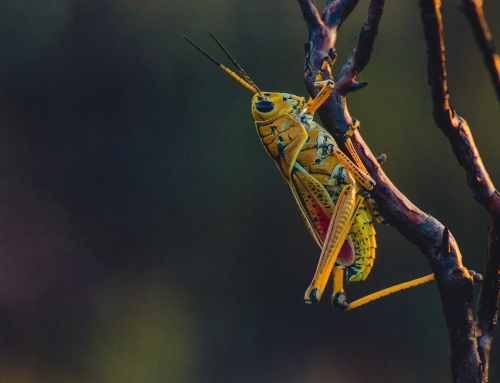 Insects for your next meal?